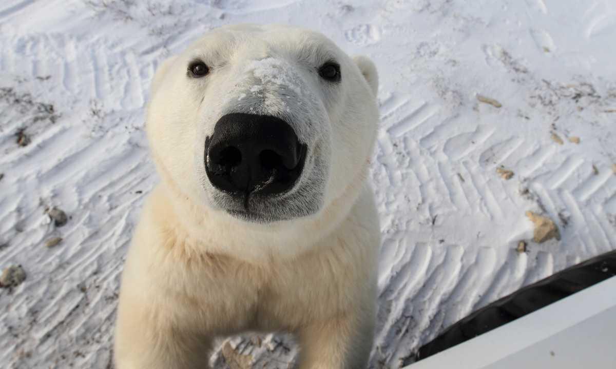 Nat_3_BradJoseph_RDT_Polarbearpose