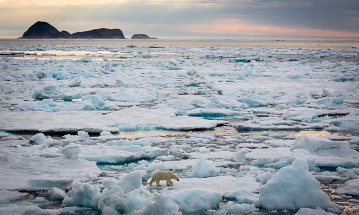 OOE_3_Carolyn-Monastra_RDT_IcefieldsPolarbear