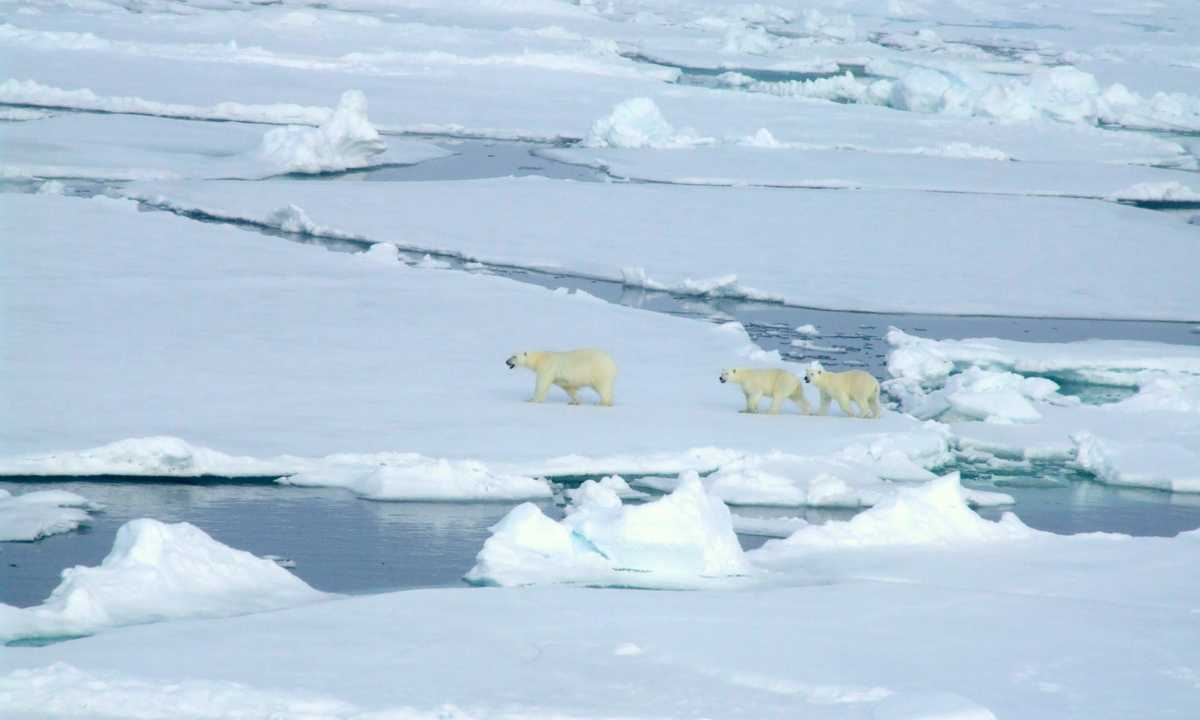 SW_3_Loli-Figueroa_ALL_North-Pole-polar-bears-family-e