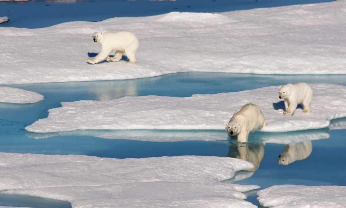 SW_JonG_FREE_Bears_on_the_ice_of_the_Northwest_Passage