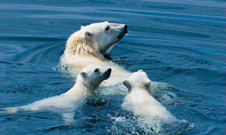 Arctic Wildlife Safari: Northwest Passage