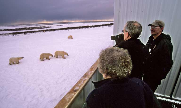 Classic Polar Bear Photographic Safari