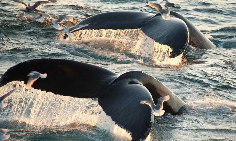 Northern Lights, Fjords and Whales