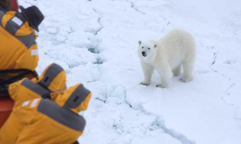 Svalbard in Focus: Photo Special